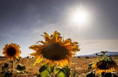 Megduplázódott az 50 fokos meleget elérő napok száma a 80-as évek óta