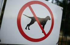 Az állatvédők figyelmeztetnek: ne ajándékozzunk állatot karácsonyra