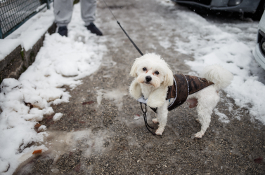 Figyelem! Szeptembertől új kötelességek várnak a kutyatulajdonosokra