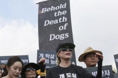 Kim Basinger állatvédőkkel együtt tiltakozott Szöulban a kutyahúsevés ellen