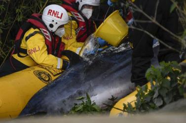 El kell altatni a Temzéből vasárnap kiszabadított négyméteres bálnát
