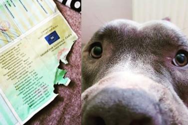 Megette a kutya az autópapírokat – mi a teendő ilyenkor?