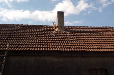 Nem mindennapi bevetés: kecskegidát mentettek a tűzoltók egy háztetőről (FOTÓK)