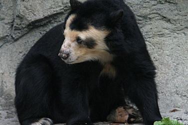 Kevéssé ismert állatok lehetnek a természetvédelem jövőbeli ikonikus alakjai