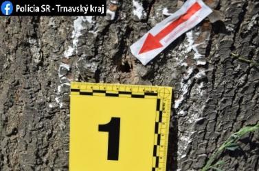 Lyukakat fúrt a fákba és vegyszert öntött beléjük egy elvetemült Dunaszerdahelyen
