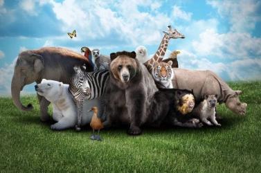 Számos emlősfaj fog kipusztulni a következő ötven évben