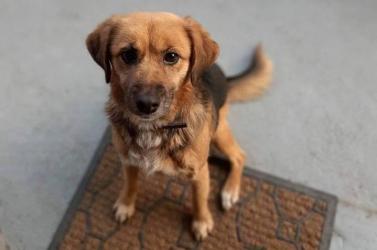 Segítsen megtalálni ezt az aranyos kutyust – Dunaszerdahelyen veszett nyoma