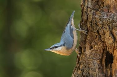 Több száz madárfaj örökítőanyagát tárták fel kutatók