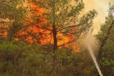 Megrázó videókon, ahogy a szlovákiai tűzoltók küzdenek a görögországi erdőtüzekkel