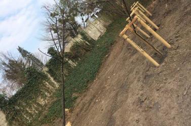 ÉSZMEGÁLL: Kettévágta egy elvetemült a frissen ültetett fákat!