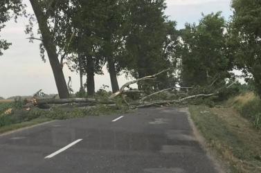 Fát döntött az útra a hatalmas szél Bakánál