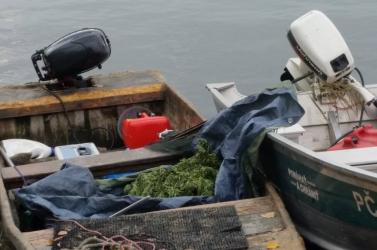 Nagy mennyiségű marihuánát csempészett egy fickó a csónakján Dunacsúnnál