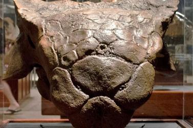 Az utolsó dinoszauruszok lábnyomait fedezték fel Dover közelében