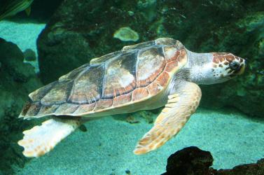 Leállították egy szálloda építését a tengeri teknősök miatt