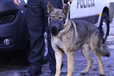 Visszaeső bűnöző fenyegetőzött bombával a kerületi bíróságon