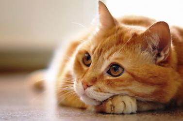BORZALOM: Ruhaszárítóban ölt meg egy vemhes macskát a kegyetlen férfi