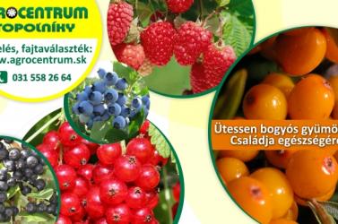 Bogyósgyümölcsök és csemegeszőlő oltványok