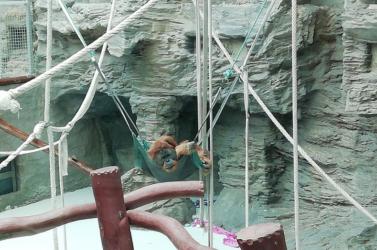Beváltotta ígéretét: 750 ezer eurót adományozott egy állatkertnek egy idős férfi