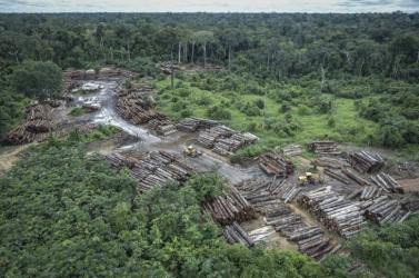 A brazil kormány elismerte, hogy súlyosbodott az erdőpusztítás az elmúlt hónapokban