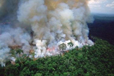 Az Amazonas-medence legmagasabb fáját nem fenyegetik a térségben pusztító erdőtüzek