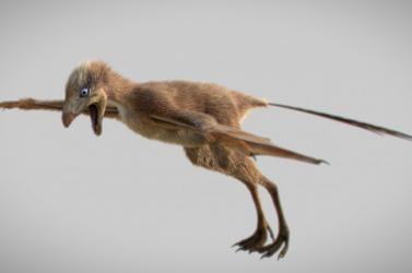 A dinoszauruszok is szenvedtek a tetvektől