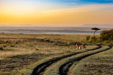 A valaha élt egyik legnagyobb húsevő emlős megkövesedett maradványaira bukkantak
