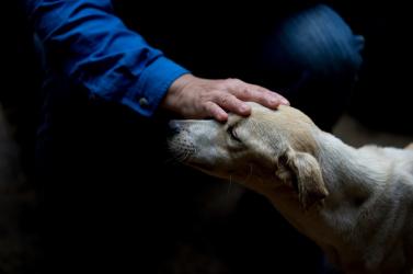 A kutya nem csak egy vagyontárgy? Nemsokára dönt a parlament!