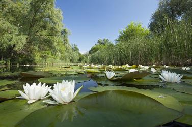 December közepéig lehet pályázni a Duna Alap felhívására