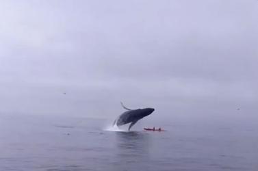 Hosszú és fájdalmas haldoklásra ítéli a bálnákat a műanyagszennyezés