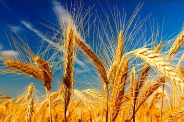 Rendkívüli ülés a Fico-féle gabonamutyi miatt