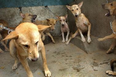 Elszaporodtak a kóbor kutyák a faluban, ezért egyszerűen kasztrálták őket