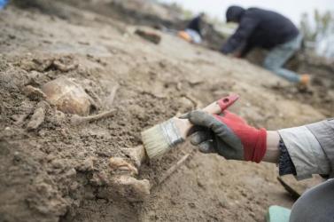 Új fajként azonosítottak egy több száz millió éves ausztrál növényfosszíliát
