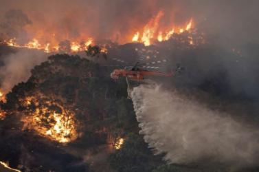 Drasztikusan növelhették a kihalással fenyegetett őshonos fajok számát az ausztrál bozóttüzek