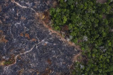 Soha nem látott tempóban irtják az esőerdőt Brazíliában
