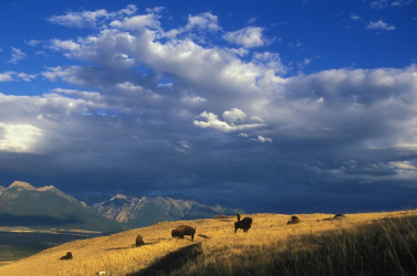Több száz emlősfaj hallhat ki az évszázad végére egy tanulmány szerint