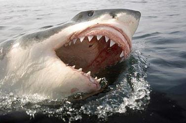Három cápa mart halálra egy fiatal nőt a Bahamákon