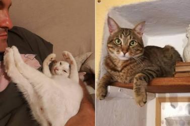 Macskái mentettek meg egy olasz házaspárt a haláltól