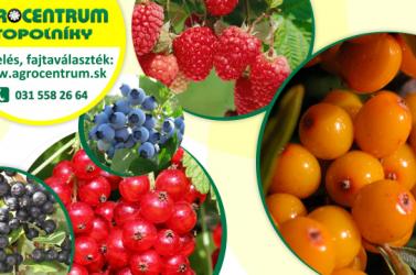 Kirobbant az őszi gyümölcsfavásár!