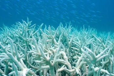A hawaii korallzátonyok többszáz millió dollárt