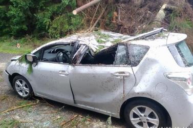 Fák dőltek egy autóra, öttagú család rekedt a járműben