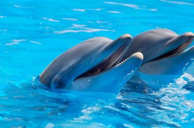 Csaknem félszáz delfin sodródott partra Massachusettsben, önkéntesek mentették meg őket