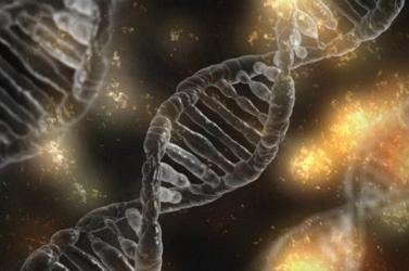 A valaha élt legnagyobb emberszabású kövületéből nyertek ki genetikai anyagot