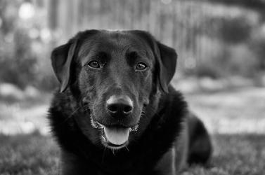 Több százan vettek végső búcsút a bombakereső kutyától
