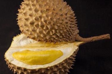 Megfejtették a durián gyümölcs szúrós szagának titkát