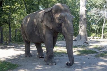 Már nem magányos a világ legmagányosabb elefántja