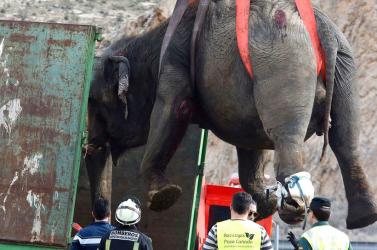 Tizennégyórás mentőakcióval emeltek ki egy elefántot egy kútból