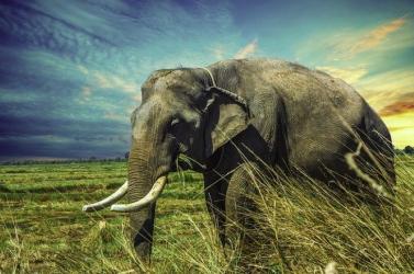 A növényevőket jobban fenyegeti a kihalás, mint a ragadozókat