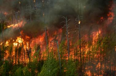 Erdőtüzek pusztítanak Portugália középső részén