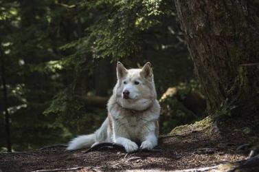Észak-Amerika legrégebbi kutyacsonttöredékét találták meg Alaszkában