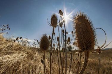 A tavalyi volt a legmelegebb év Európában a feljegyzések kezdete óta